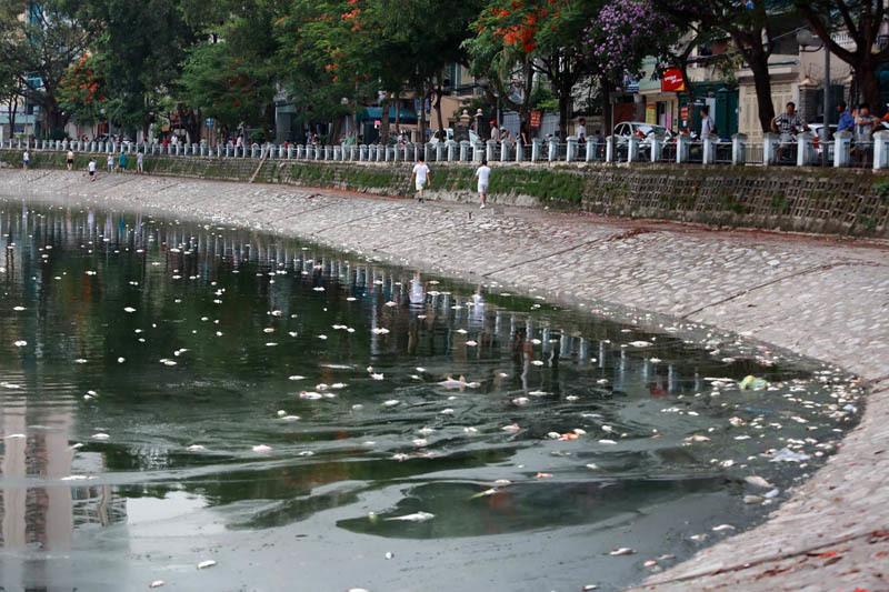 Hà Nội: Hàng chục tấn cá chết nổi trắng hồ Hoàng Cầu