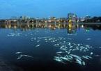 Chủ tịch HN chỉ đạo khẩn cấp cứu cá hồ Hoàng Cầu