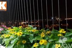 Hà Nội: Đã mắt ngắm hoa rực sắc ban công 4m²