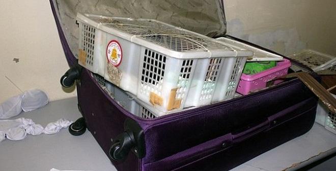 hành lý, hành lý khủng trong vali, hành lý của hành khách, hành lý cất giấu động vật