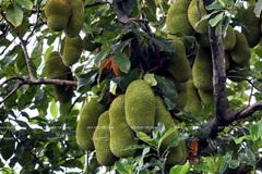7 thiên đường trái cây cực hấp dẫn có thể đi về trong ngày từ Sài Gòn