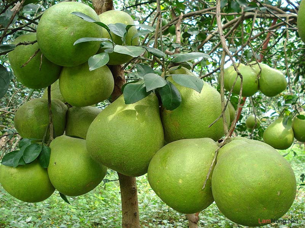 thiên đường trái cây, miệt vườn, vườn cây, Nam Bộ, Sài Gòn