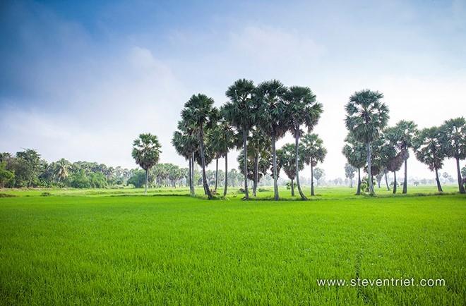Về Châu Đốc - xứ sở của những hàng cây thốt nốt