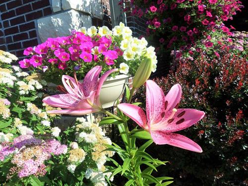 mẹ Việt, vườn hoa, phụ nữ, nhà đẹp, vườn đẹp