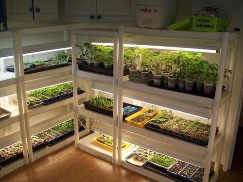 thiết kế vườn rau sạch trong nhà, trồng rau trong chậu, trồng rau sạch