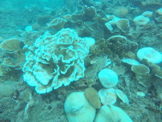 San hô tại Côn Đảo bị tẩy trắng hàng loạt