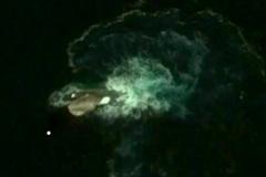 Phát hiện quái vật biển 'khổng lồ' ở Nam Cực