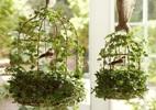 8 loại cây cảnh ví như 'máy lọc không khí' xua tan nóng bức
