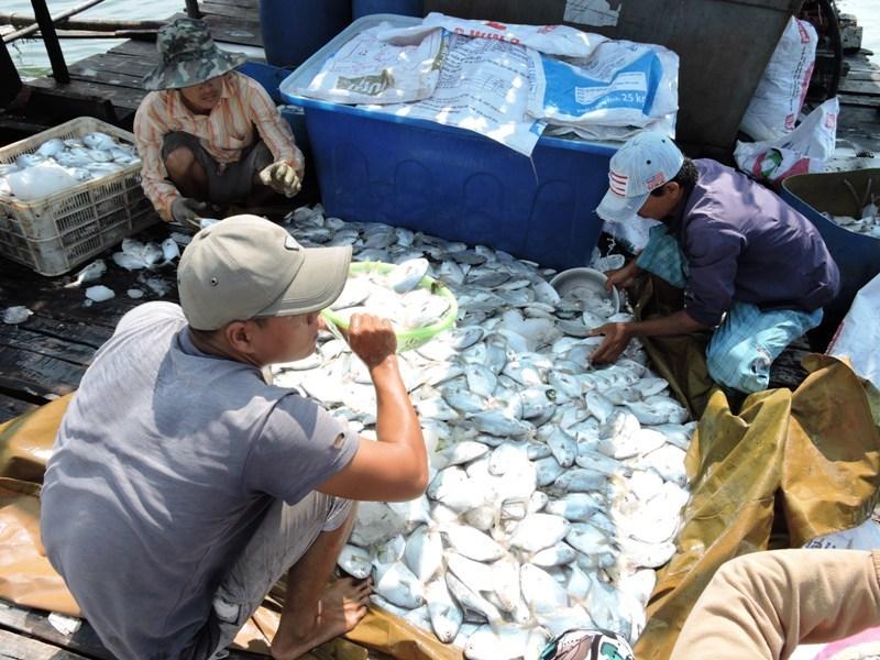 Tranh cãi vụ đòi DN bồi thường 18 tỉ do xả thải làm cá chết
