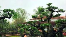 Sân vườn xinh đẹp ngập cây cảnh, hoa lá giữa lòng Hà Nội