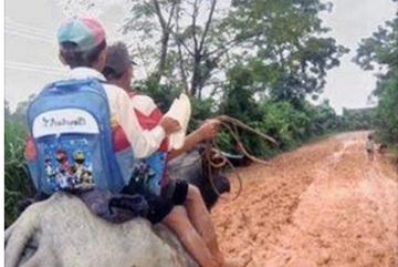 Chạnh lòng bức ảnh học trò cưỡi trâu đi học