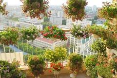 Ban công tầng 18 ngập hoa khiến ai cũng phải lòng ở Hà Nội