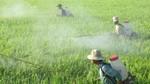Mỗi ngày 20 tỷ thuốc trừ sâu Trung Quốc: Việt Nam tự đầu độc mình