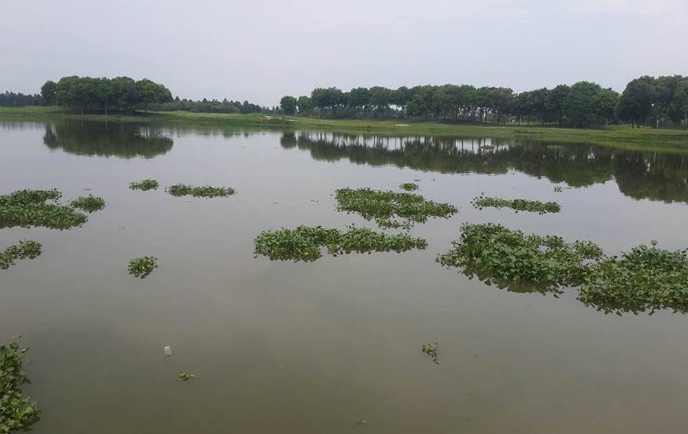 Đông Anh, cá sấu, Hà Nội