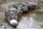 Hi hữu: Giữa Hà Nội bắt được cá sấu 70kg