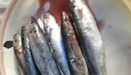 """Đáng sợ với cá nục xịn """"chỉ đáng cho mèo ăn"""" ở Hà Nội"""