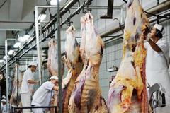 Cấm xuất khẩu bò cho Việt Nam, phía Úc lên tiếng