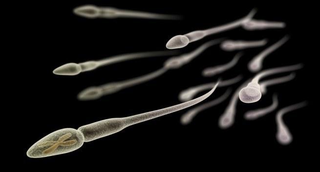 tinh binh, tinh trùng, buồng trứng, thụ thai, vô sinh