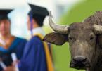 Cử nhân về quê nuôi giun, đại gia không cần bằng đại học