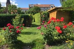"""Mẹ Việt mát tay chăm vườn """"nghìn lẻ một"""" loại hồng tại Đức"""