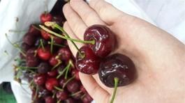 Sự thật về chuyện bán cherry trên mạng có thể khiến bạn sốc mấy ngày liền