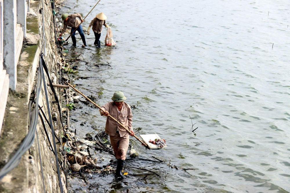 cá chết, ven hồ Tây