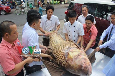 Cá hô 'khủng' nặng gần 130kg về Sài Gòn