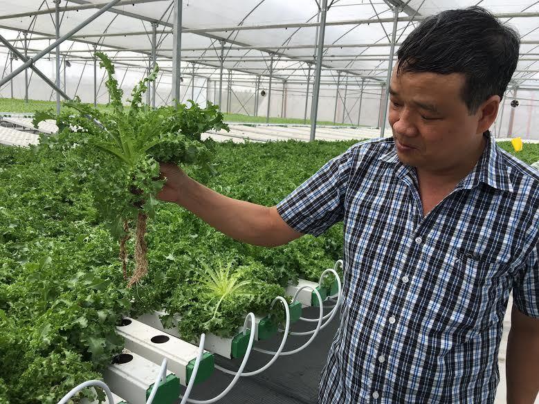 'Nhà máy' rau sạch không cần đất, chẳng ướt mưa ở Việt Nam