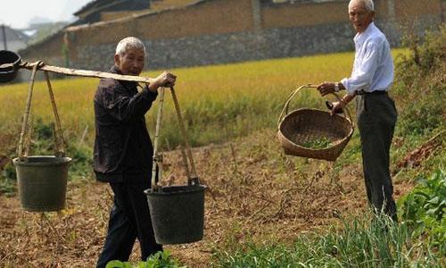 Miếng đất bỏ không 5 năm và sự 'ngốc nghếch' của người Nhật Bản