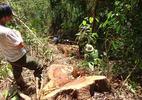 Truy bắt trùm lâm tặc phá rừng, dọa giết kiểm lâm
