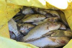 Nghệ An: Mưa đột ngột sau hạn nặng, cá chết la liệt