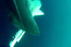 Xem cá mập 'khủng' phá nát drone với tốc độ kinh hoàng