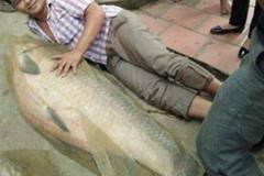 Bắt được cá trắm 'khủng' nặng 52 kg, dài bằng người lớn