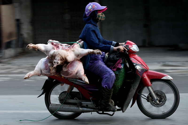 Heo 'lõa thể' từ khắp ngả nườm nượp vào chợ Thủ đô