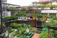 Sân thượng 100m2 đủ trồng rau, nuôi gà, thả cá, nhốt thỏ