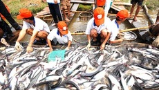 Tổng cục Thủy sản kiểm định khống hơn 800 sản phẩm