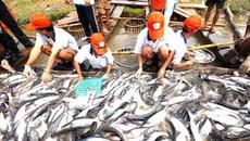 Phó Thủ tướng yêu cầu làm rõ vụ kiểm định khống 800 sản phẩm thủy sản