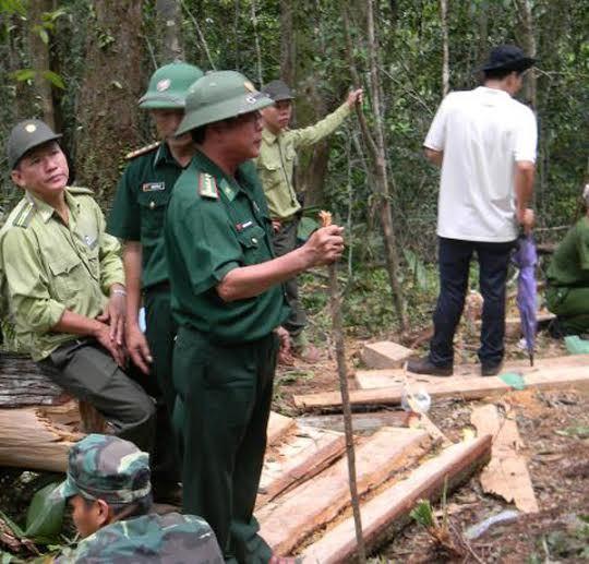 phá rừng pơ mu, bộ đội biên phòng, phá rừng biên giới, Quảng Nam