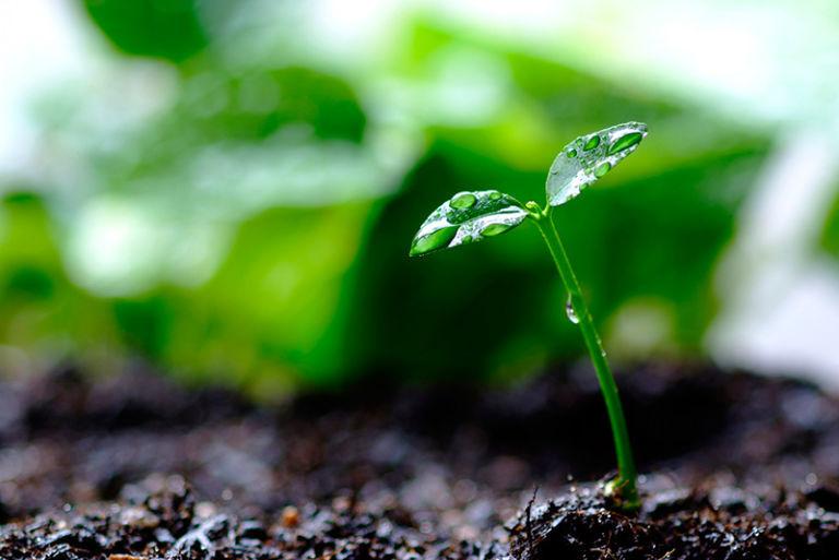rau, phố, canxi, làm vườn, vỏ trứng, mẹo vặt