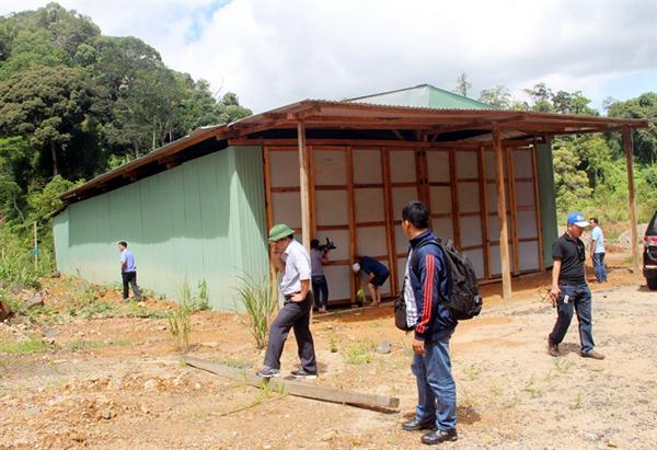 phá rừng, phá rừng pơ mu, phá rừng pơ mu ở Quảng Nam, pơ mu, lâm tặc