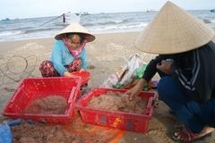 Quảng Bình: Yêu cầu lấy mẫu kiểm tra chất lượng ruốc biển