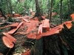 """""""Chúng ta có làm được không, có cứu được rừng không?"""""""