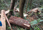 Trùm đường dây phá rừng pơ mu là kẻ kín tiếng