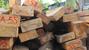 Vụ phá rừng pơ mu: Ủy ban Kiểm tra Tỉnh ủy vào cuộc