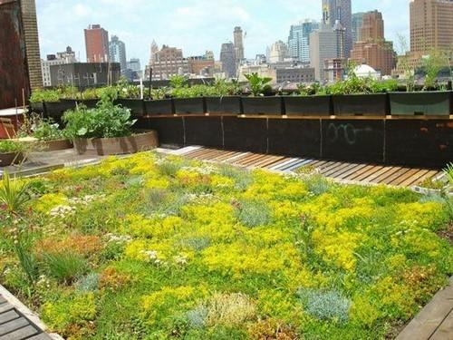 20160801112704 san thuong4 Chia sẻ 4 ý tưởng cho vườn trên sân thượng chuẩn không cần chỉnh bạn nhất định phải thử