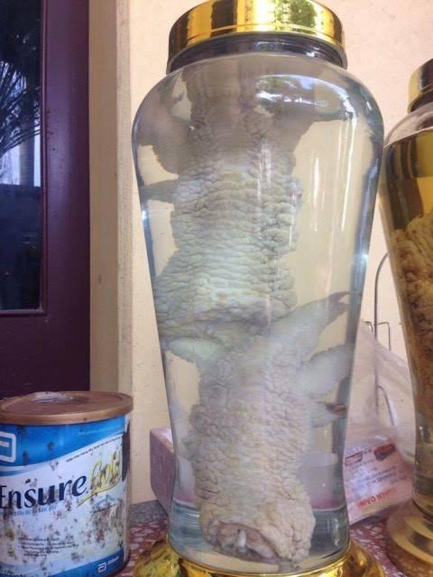gà đông đảo, chân gà đông tảo ngâm rượu, chân gà khủng, gà đông tảo tiến vua