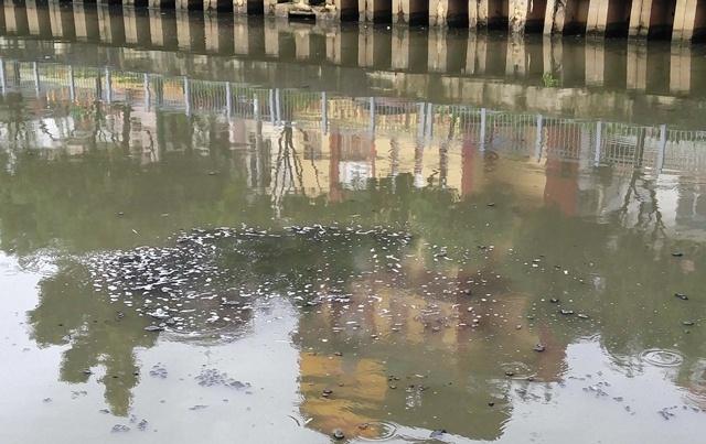 Cá chết, nước sôi sùng sục ở kênh Nhiêu Lộc - Thị Nghè