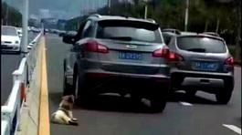 Dân mạng phẫn nộ tài xế kéo lê chó trên đường đến chết