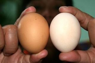 Cách nhận biết trứng gà Trung Quốc, trứng tẩy trắng