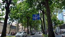 'Chốt' phương án chặt cây đường Tôn Đức Thắng để làm ga metro
